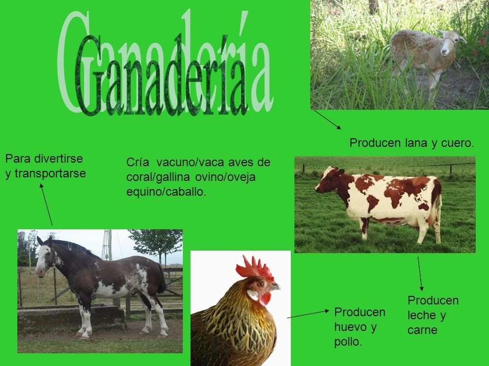 Cría vacuno/vaca aves de coral/gallina ovino/oveja equino/caballo.