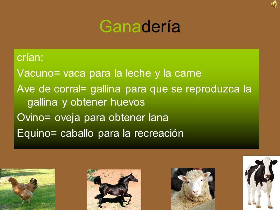 Ganadería crían: Vacuno= vaca para la leche y la carne Ave de corral= gallina para que se reproduzca la gallina y obtener huevos Ovino= oveja para obtener lana Equino= caballo para la recreación