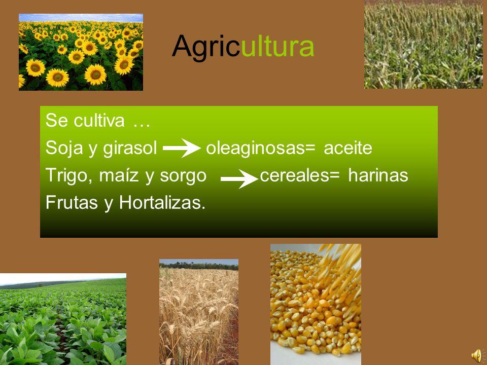 Agricultura Se cultiva … Soja y girasol oleaginosas= aceite Trigo, maíz y sorgo cereales= harinas Frutas y Hortalizas.