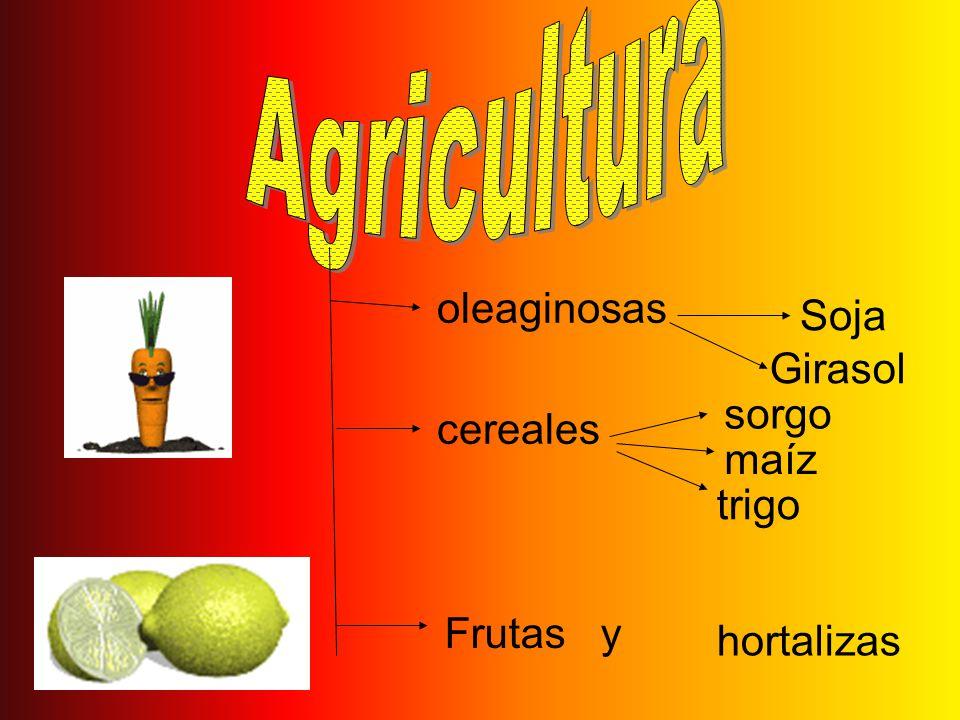 oleaginosas Girasol Soja cereales trigo maíz sorgo Frutas y hortalizas