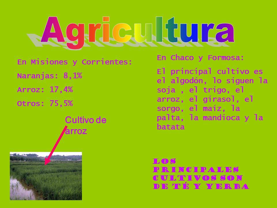 En Misiones y Corrientes: Naranjas: 8,1% Arroz: 17,4% Otros: 75,5% En Chaco y Formosa: El principal cultivo es el algodón, lo siguen la soja, el trigo, el arroz, el girasol, el sorgo, el maíz, la palta, la mandioca y la batata Los principales cultivos son de té y yerba Cultivo de arroz