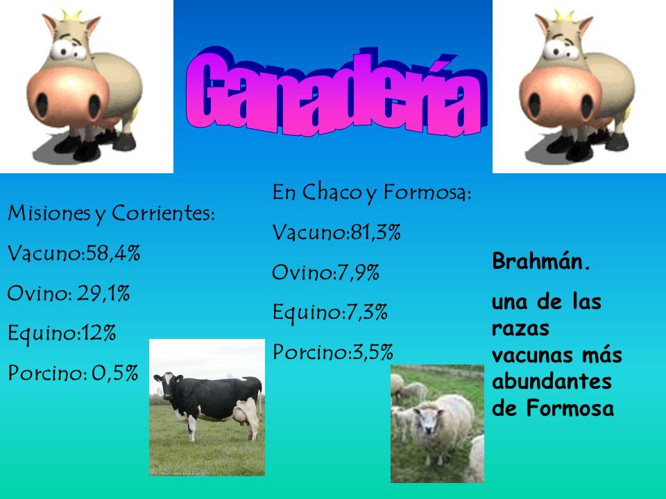 Misiones y Corrientes: Vacuno:58,4% Ovino: 29,1% Equino:12% Porcino: 0,5% En Chaco y Formosa: Vacuno:81,3% Ovino:7,9% Equino:7,3% Porcino:3,5% Brahmán.