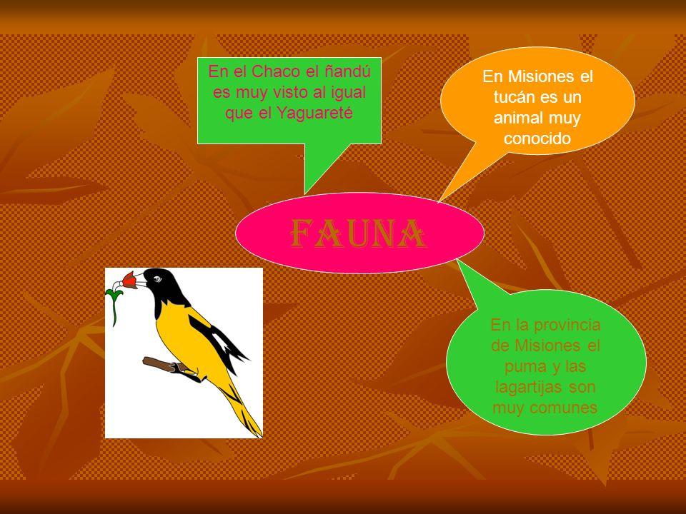 fauna En la provincia de Misiones el puma y las lagartijas son muy comunes En Misiones el tucán es un animal muy conocido En el Chaco el ñandú es muy visto al igual que el Yaguareté