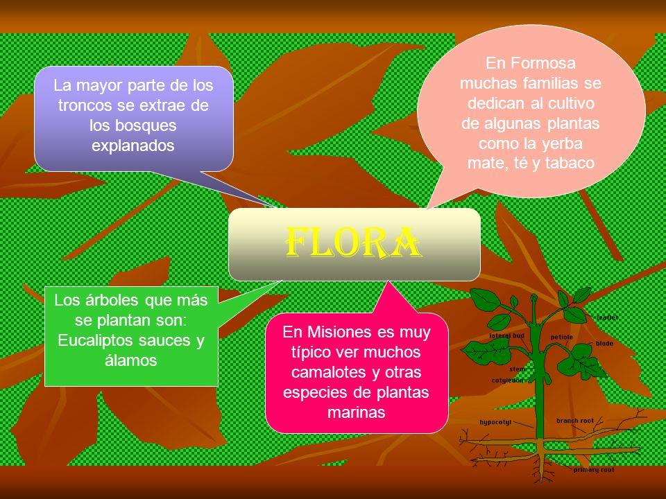 Flora En Formosa muchas familias se dedican al cultivo de algunas plantas como la yerba mate, té y tabaco En Misiones es muy típico ver muchos camalotes y otras especies de plantas marinas Los árboles que más se plantan son: Eucaliptos sauces y álamos La mayor parte de los troncos se extrae de los bosques explanados