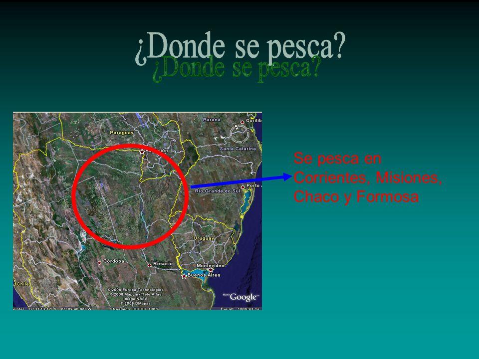 Se pesca en Corrientes, Misiones, Chaco y Formosa