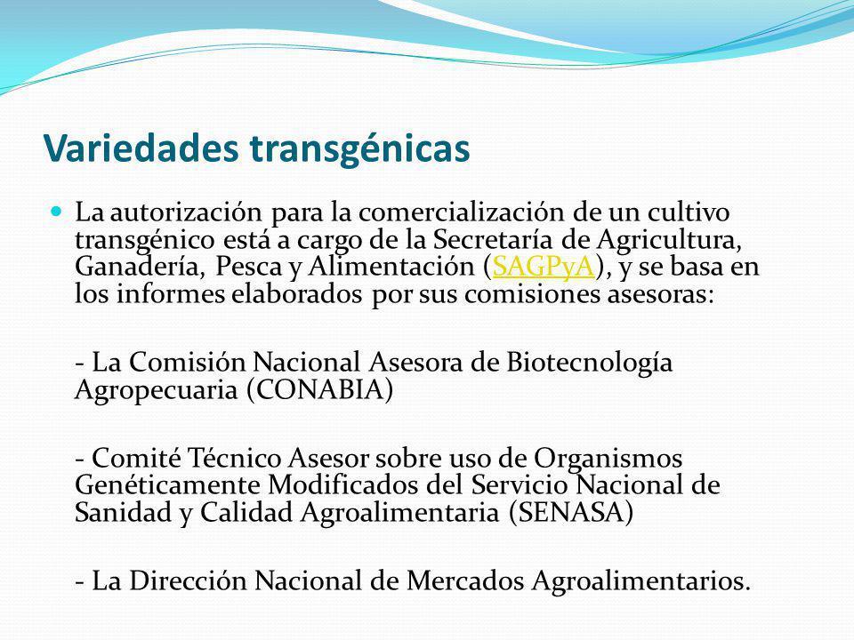 Variedades transgénicas La autorización para la comercialización de un cultivo transgénico está a cargo de la Secretaría de Agricultura, Ganadería, Pesca y Alimentación (SAGPyA), y se basa en los informes elaborados por sus comisiones asesoras:SAGPyA - La Comisión Nacional Asesora de Biotecnología Agropecuaria (CONABIA) - Comité Técnico Asesor sobre uso de Organismos Genéticamente Modificados del Servicio Nacional de Sanidad y Calidad Agroalimentaria (SENASA) - La Dirección Nacional de Mercados Agroalimentarios.