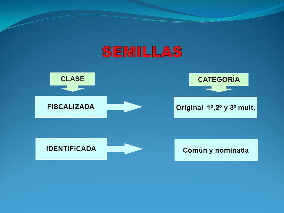 IDENTIFICADA FISCALIZADA Original, 1º,2º y 3º mult. Común y nominada CLASE CATEGORÍA