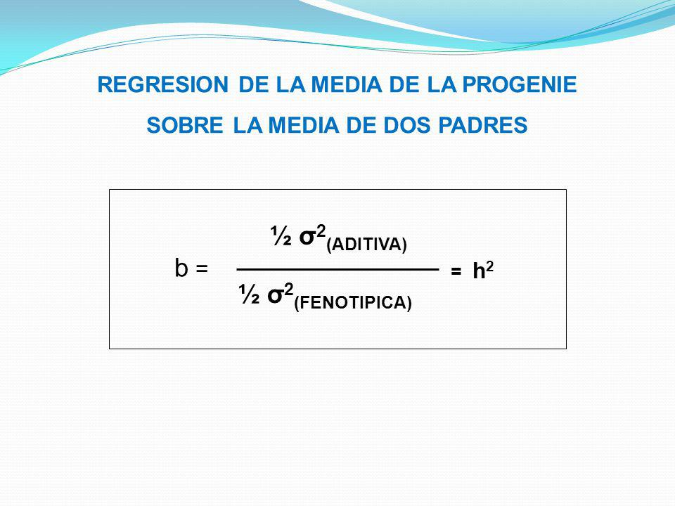 REGRESION DE LA MEDIA DE LA PROGENIE SOBRE LA MEDIA DE DOS PADRES b = ½ σ 2 (ADITIVA) ½ σ 2 (FENOTIPICA) = h 2