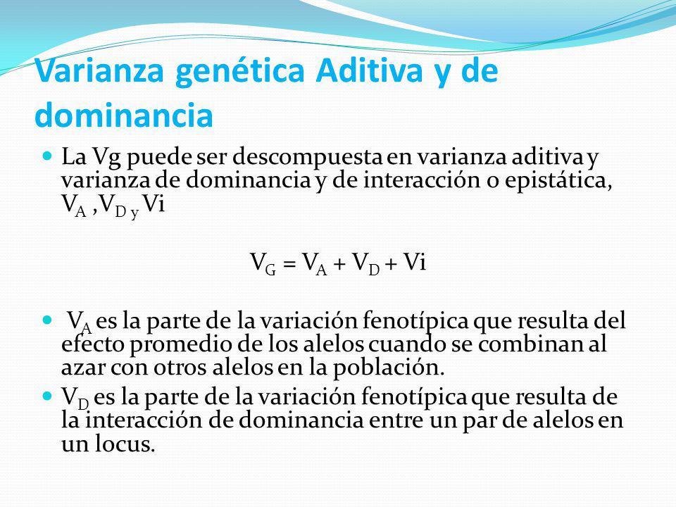 Varianzas, heredabilidad y metodología de estimación de acuerdo al tipo de genotipos GenotiposTipo de Varianza Tipo de Heredabilidad Metodología F2Vp F 1 y F2Vp + VgAmpliaVarias Familias F3 y F4Vp + VgEstrictaRegresión P1, P2, F1, F2, R1 y R2Vp + Vg + Va + Vd +Ve Amplia y estrictaWagner Padre y F1Va + VpEstrictaRegresión Media padres y F1Va + VpEstrictaRegresión N ciclos de selecciónVpAmplia o EstrictaRealizada Conjunto de líneas purasVa + VeEstrictaAnava Conjunto de clonesVg + VeAmpliaAnava