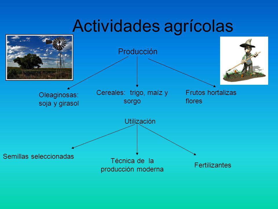 Actividades agrícolas Cereales: trigo, maíz y sorgo Oleaginosas: soja y girasol Frutos hortalizas flores Producción Utilización Técnica de la producción moderna Semillas seleccionadas Fertilizantes