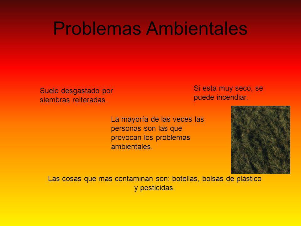 Problemas Ambientales Suelo desgastado por siembras reiteradas.