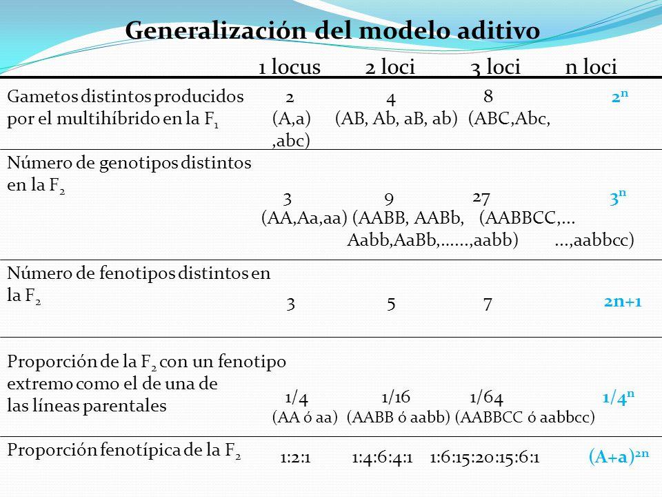 Generalización del modelo aditivo Gametos distintos producidos por el multihíbrido en la F 1 Número de genotipos distintos en la F 2 Número de fenotip