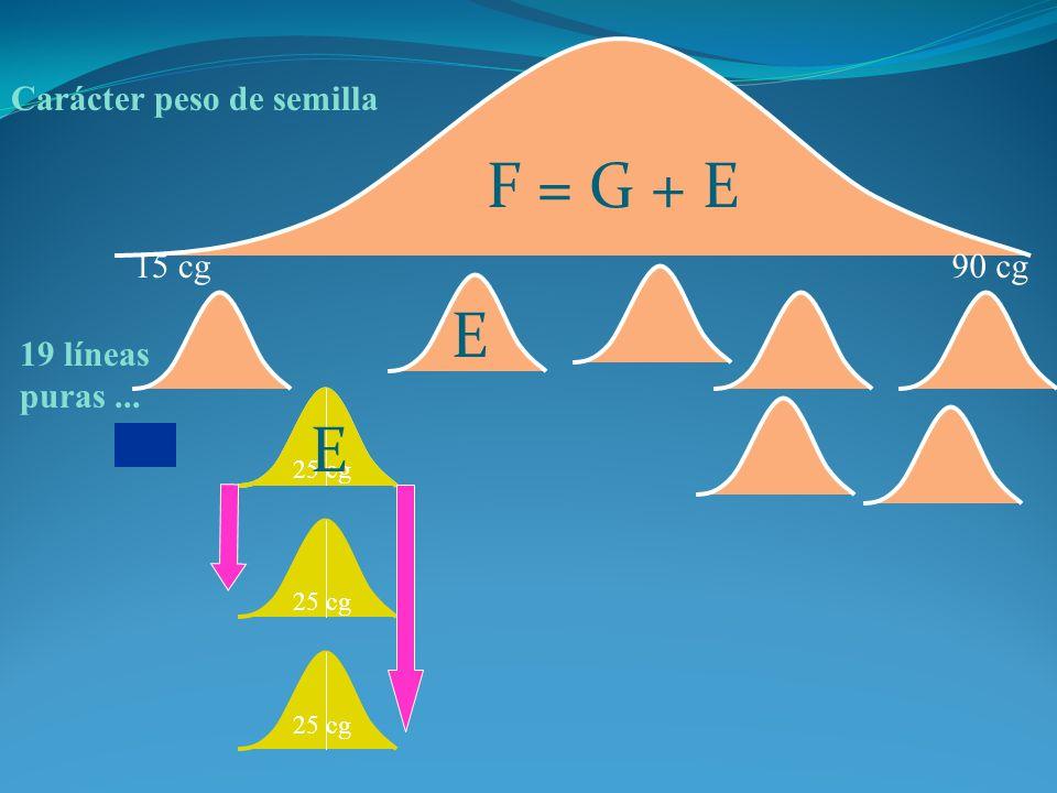 Carácter peso de semilla 15 cg90 cg 19 líneas puras... 25 cg F = G + E E E