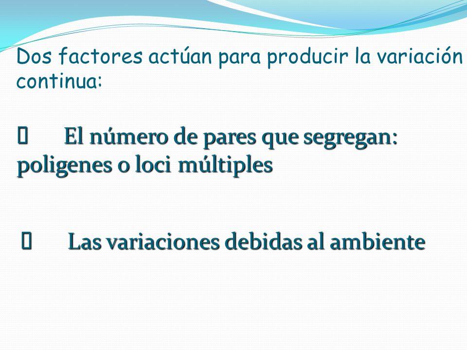 Dos factores actúan para producir la variación continua: El número de pares que segregan: poligenes o loci múltiples El número de pares que segregan: