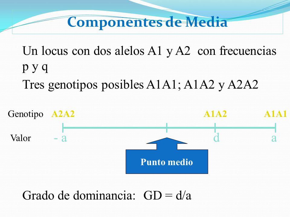 Componentes de Media Un locus con dos alelos A1 y A2 con frecuencias p y q Tres genotipos posibles A1A1; A1A2 y A2A2 A2A2A1A1A1A2 Punto medio - a ad G
