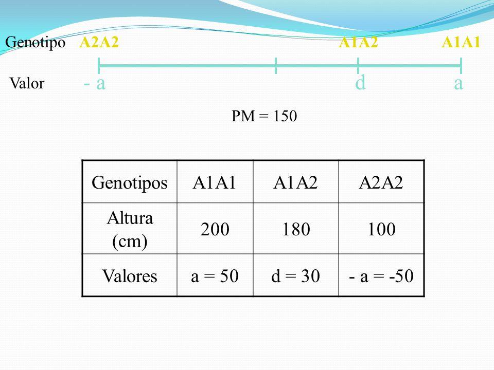 A2A2A1A1A1A2 - a ad Genotipo Valor GenotiposA1A1A1A2A2A2 Altura (cm) 200180100 Valoresa = 50d = 30- a = -50 PM = 150