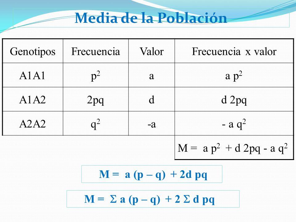 Media de la Población GenotiposFrecuenciaValorFrecuencia x valor A1A1p2p2 aa p 2 A1A22pqdd 2pq A2A2q2q2 -a- a q 2 M = a p 2 + d 2pq - a q 2 M = a (p –