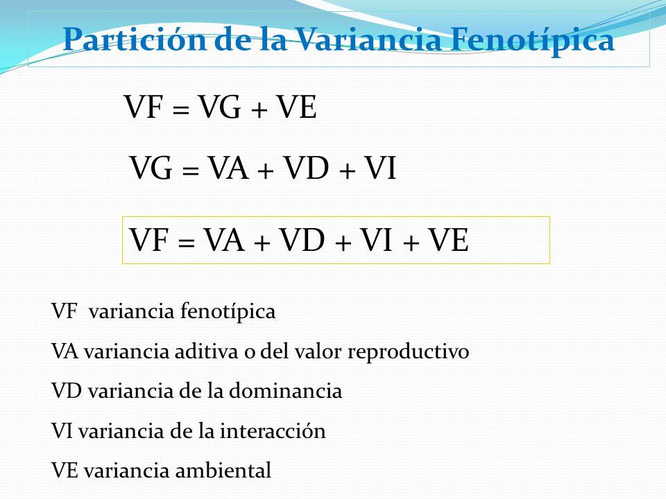 Partición de la Variancia Fenotípica VG = VA + VD + VI VF = VG + VE VF = VA + VD + VI + VE VF variancia fenotípica VA variancia aditiva o del valor re