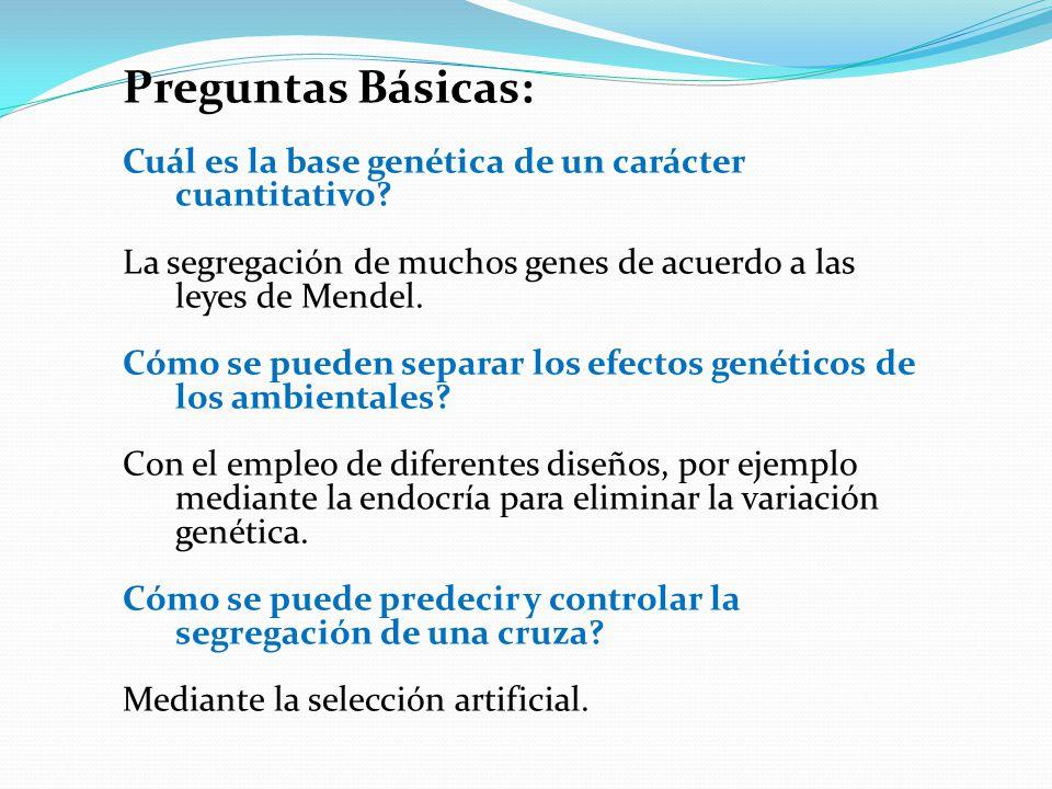 Preguntas Básicas: Cuál es la base genética de un carácter cuantitativo? La segregación de muchos genes de acuerdo a las leyes de Mendel. Cómo se pued