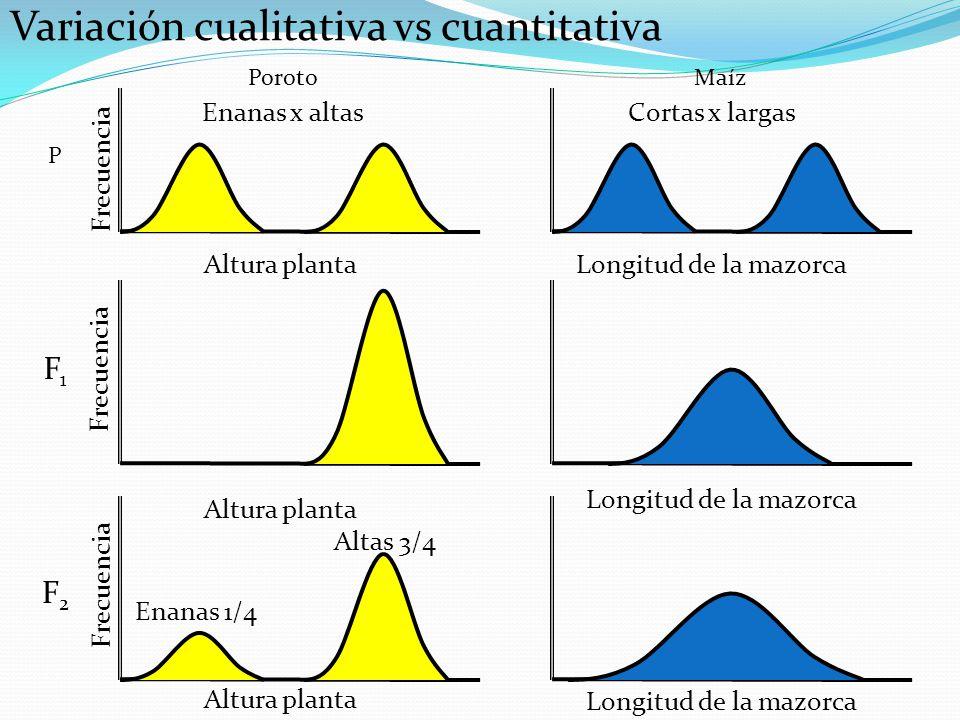 POBLACIONES GENETICAS POBLACION HOMOGENEA HETEROCIGOTA aa Bb cc Dd aa Bb cc Dd aa Bb cc Dd aa Bb cc Dd VARIANZA GENÉTICA = 0; VARIANZA AMBIENTAL = .