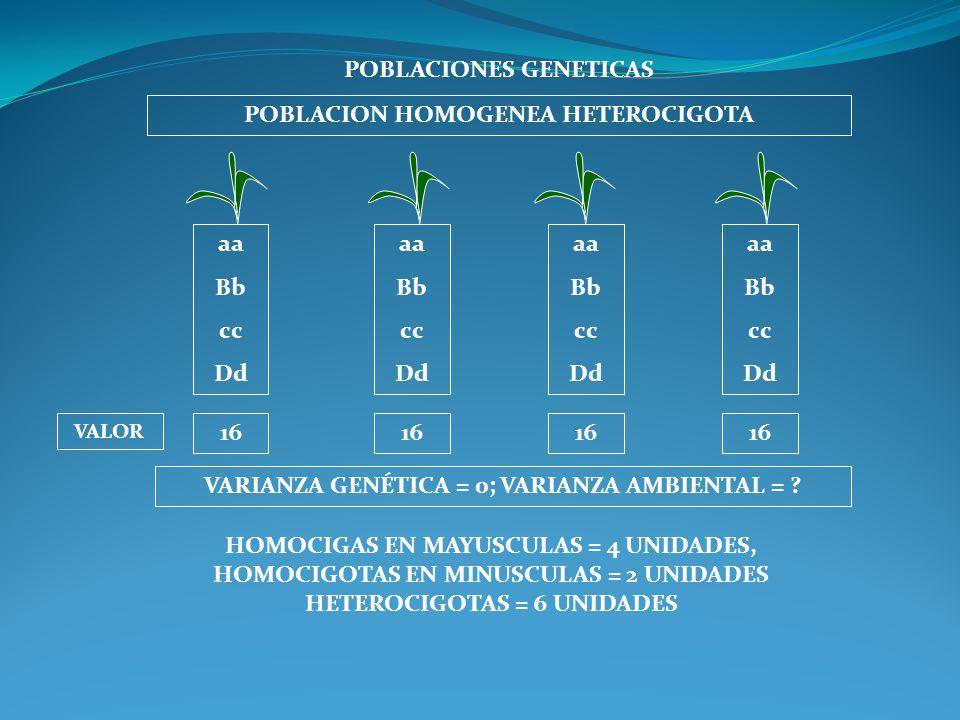 POBLACIONES GENETICAS POBLACION HOMOGENEA HETEROCIGOTA aa Bb cc Dd aa Bb cc Dd aa Bb cc Dd aa Bb cc Dd VARIANZA GENÉTICA = 0; VARIANZA AMBIENTAL = ? V