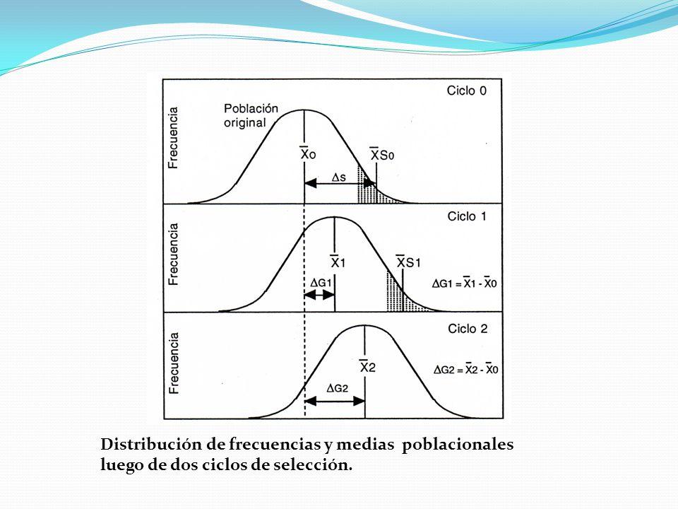 Distribución de frecuencias y medias poblacionales luego de dos ciclos de selección.