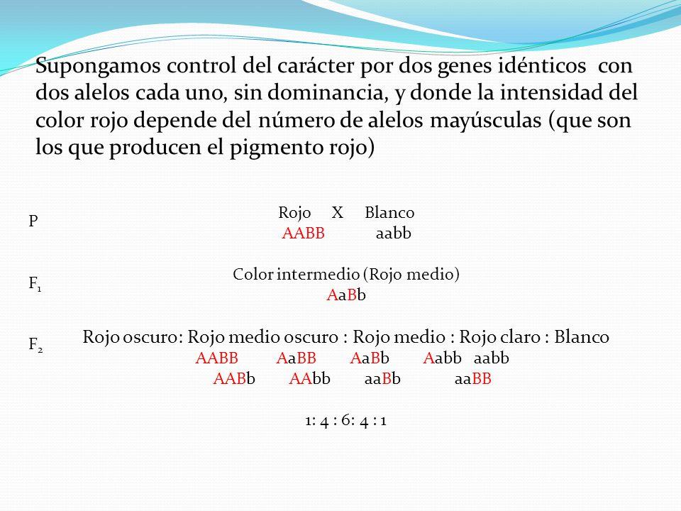 Mismo supuesto anterior pero con tres genes Rojo X Blanco AABBCC aabbcc Color intermedio X Color intermedio (autofecundación) PF1PF1 F2F2 Fenotipo Rojo -------------> Blanco Número alelos que dan color 6 : 5 : 4 : 3 : 2 : 1 : 0 Proporción 1 : 6 : 15 : 20 : 15 : 6 : 1 AaBbCc Supuestos: los genes segregan independientemente y sus efectos son aditivos