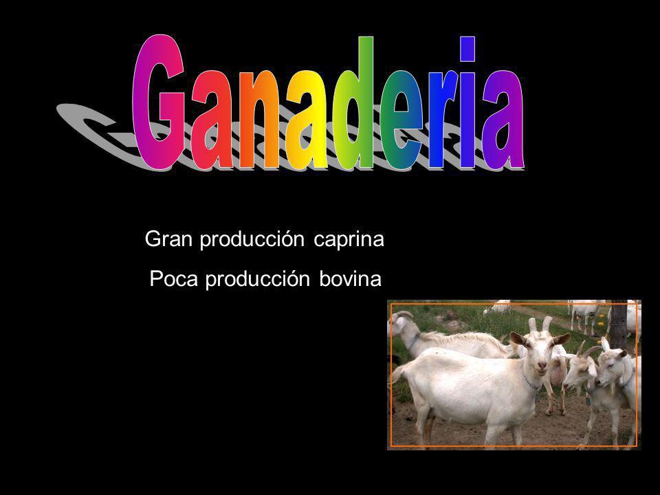 Gran producción caprina Poca producción bovina