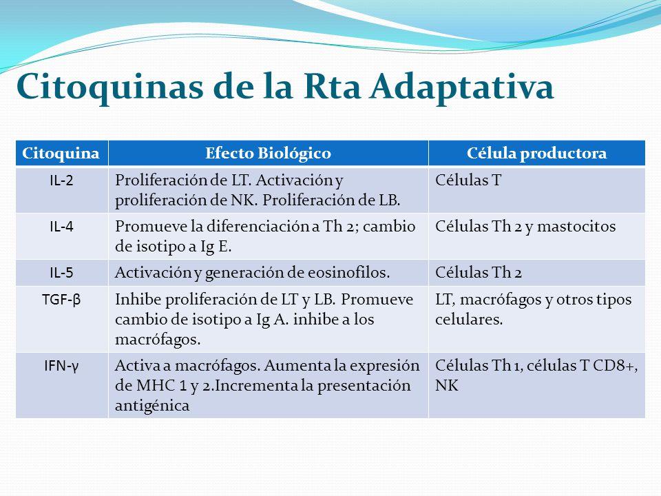 Citoquinas de la Rta Adaptativa CitoquinaEfecto BiológicoCélula productora IL-2Proliferación de LT. Activación y proliferación de NK. Proliferación de