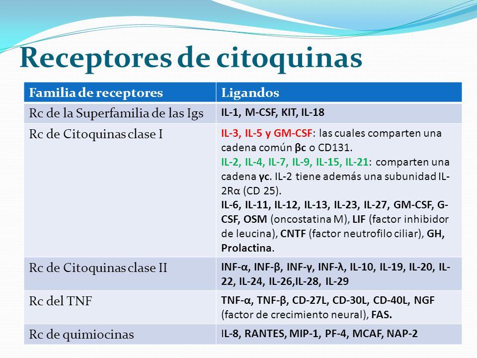 Familia de receptoresLigandos Rc de la Superfamilia de las Igs IL-1, M-CSF, KIT, IL-18 Rc de Citoquinas clase I IL-3, IL-5 y GM-CSF: las cuales compar