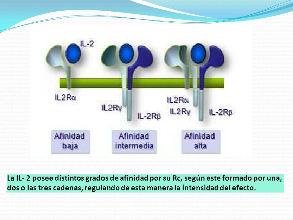 La IL- 2 posee distintos grados de afinidad por su Rc, según este formado por una, dos o las tres cadenas, regulando de esta manera la intensidad del