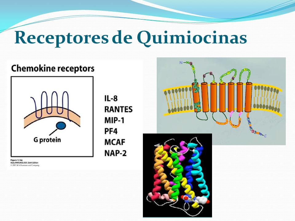 Receptores de Quimiocinas