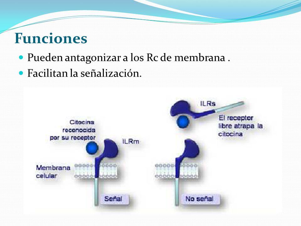 Funciones Pueden antagonizar a los Rc de membrana. Facilitan la señalización.