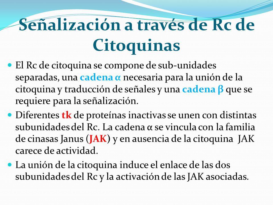 Señalización a través de Rc de Citoquinas El Rc de citoquina se compone de sub-unidades separadas, una cadena α necesaria para la unión de la citoquin