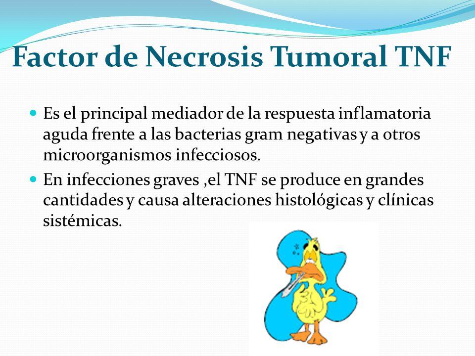 Factor de Necrosis Tumoral TNF Es el principal mediador de la respuesta inflamatoria aguda frente a las bacterias gram negativas y a otros microorgani