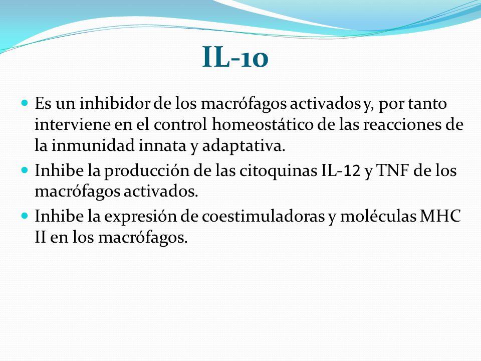 IL-10 Es un inhibidor de los macrófagos activados y, por tanto interviene en el control homeostático de las reacciones de la inmunidad innata y adapta