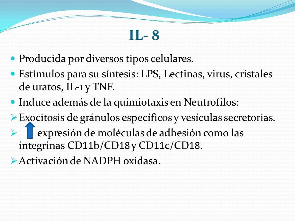 IL- 8 Producida por diversos tipos celulares. Estímulos para su síntesis: LPS, Lectinas, virus, cristales de uratos, IL-1 y TNF. Induce además de la q