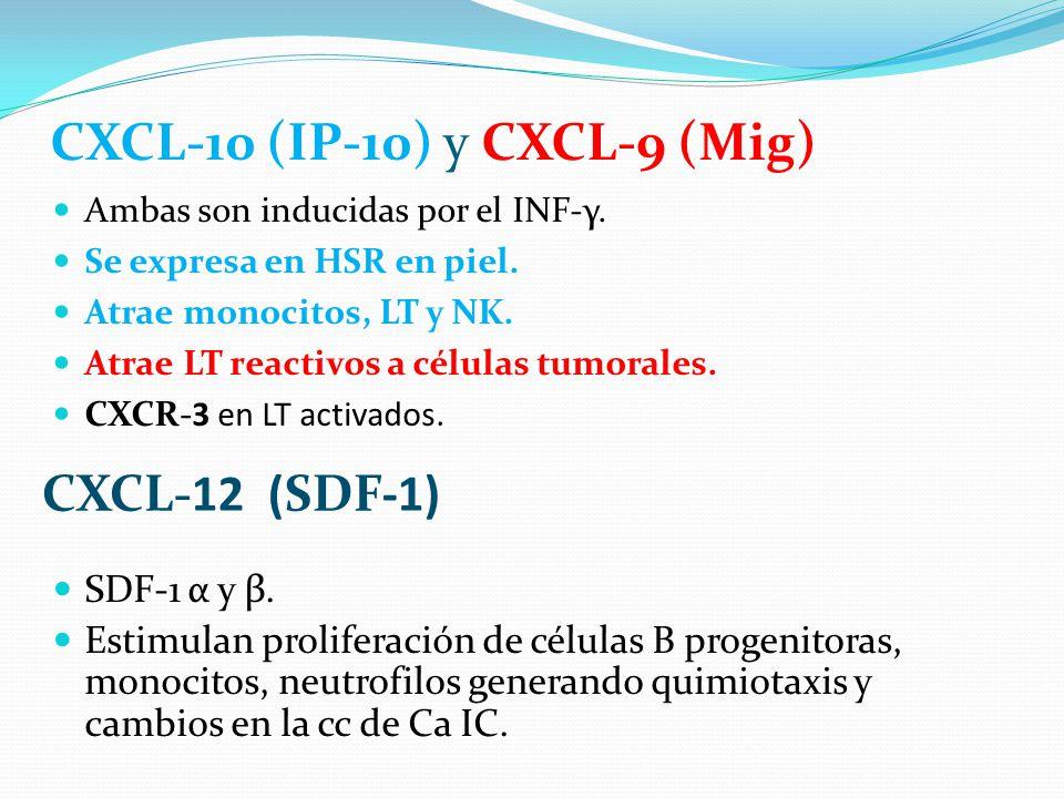 CXCL-10 (IP-10) y CXCL-9 (Mig) Ambas son inducidas por el INF-γ. Se expresa en HSR en piel. Atrae monocitos, LT y NK. Atrae LT reactivos a células tum