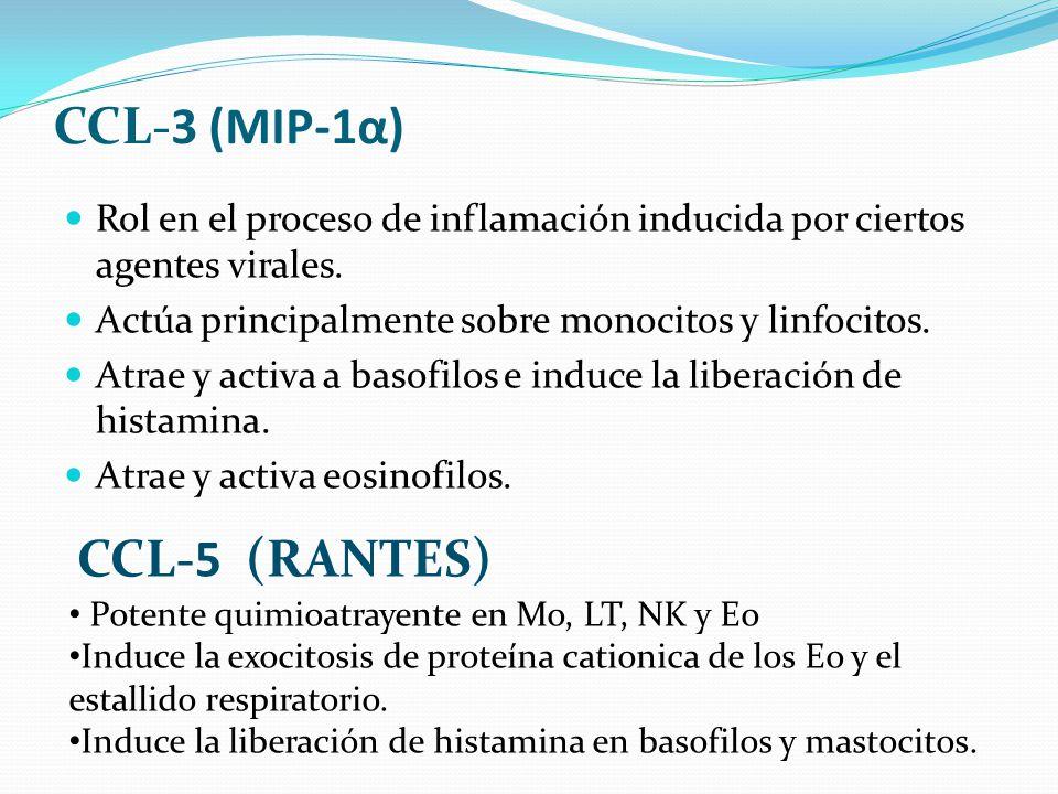 CCL-3 (MIP-1α) Rol en el proceso de inflamación inducida por ciertos agentes virales. Actúa principalmente sobre monocitos y linfocitos. Atrae y activ
