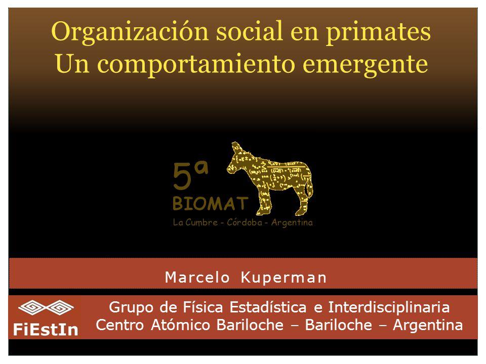 Marcelo Kuperman Grupo de Física Estadística e Interdisciplinaria Centro Atómico Bariloche – Bariloche – Argentina Organización social en primates Un