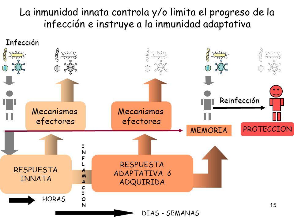 15 La inmunidad innata controla y/o limita el progreso de la infección e instruye a la inmunidad adaptativa Mecanismos efectores Mecanismos efectores