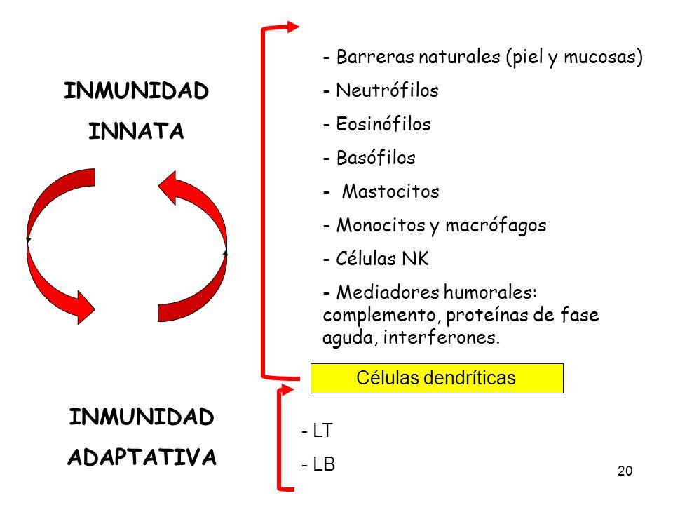 20 INMUNIDAD INNATA INMUNIDAD ADAPTATIVA - Barreras naturales (piel y mucosas) - Neutrófilos - Eosinófilos - Basófilos - Mastocitos - Monocitos y macr