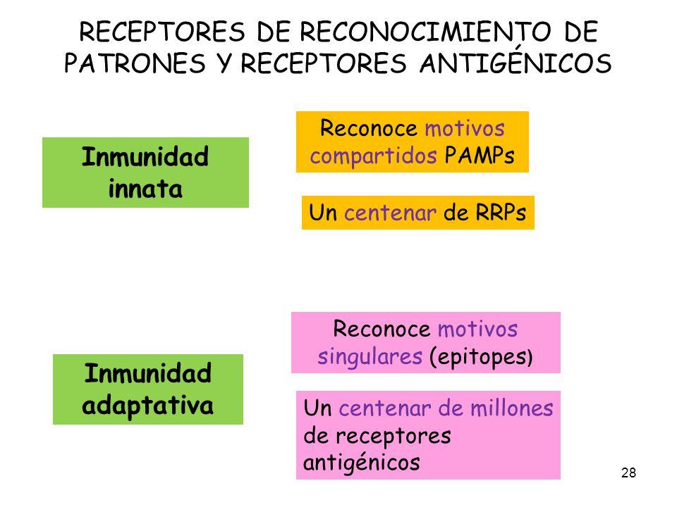 RECEPTORES DE RECONOCIMIENTO DE PATRONES Y RECEPTORES ANTIGÉNICOS 28 Reconoce motivos compartidos PAMPs Un centenar de RRPs Inmunidad adaptativa Recon