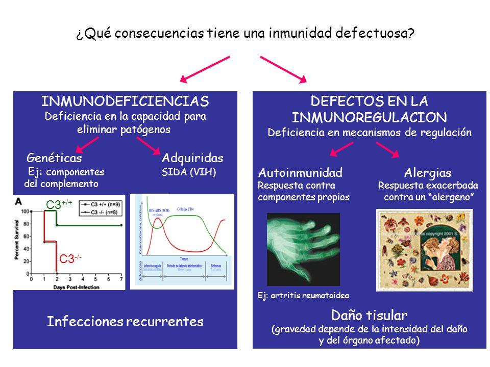 ¿ Qué consecuencias tiene una inmunidad defectuosa? DEFECTOS EN LA INMUNOREGULACION Deficiencia en mecanismos de regulación Autoinmunidad Alergias Res