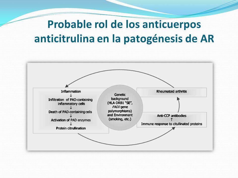 Probable rol de los anticuerpos anticitrulina en la patogénesis de AR