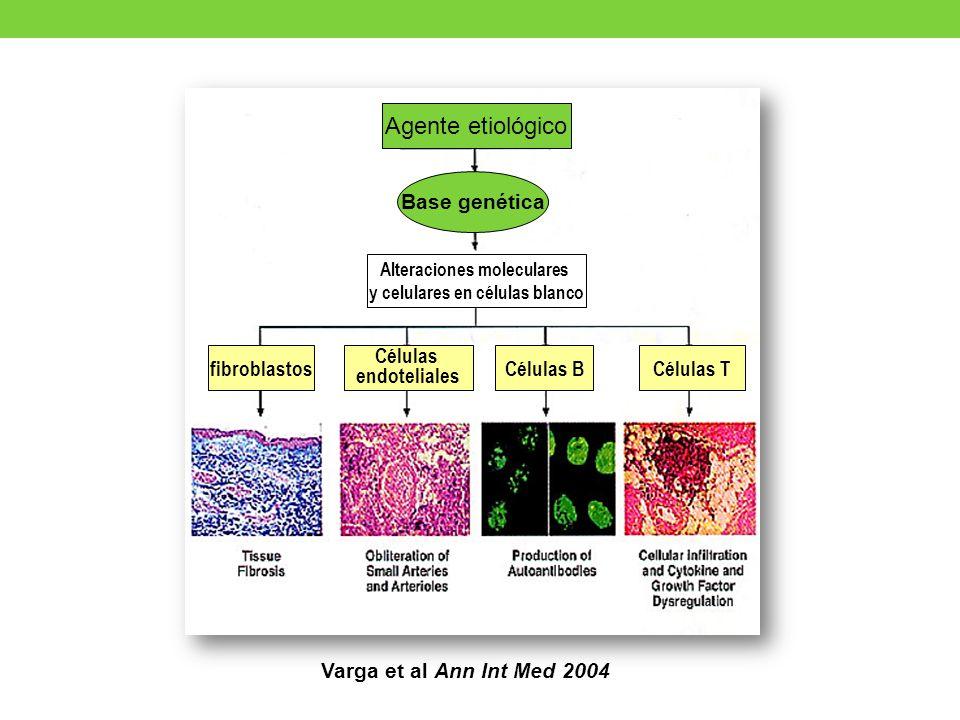 Varga et al Ann Int Med 2004 Agente etiológico Base genética Alteraciones moleculares y celulares en células blanco fibroblastos Células endoteliales Células BCélulas T
