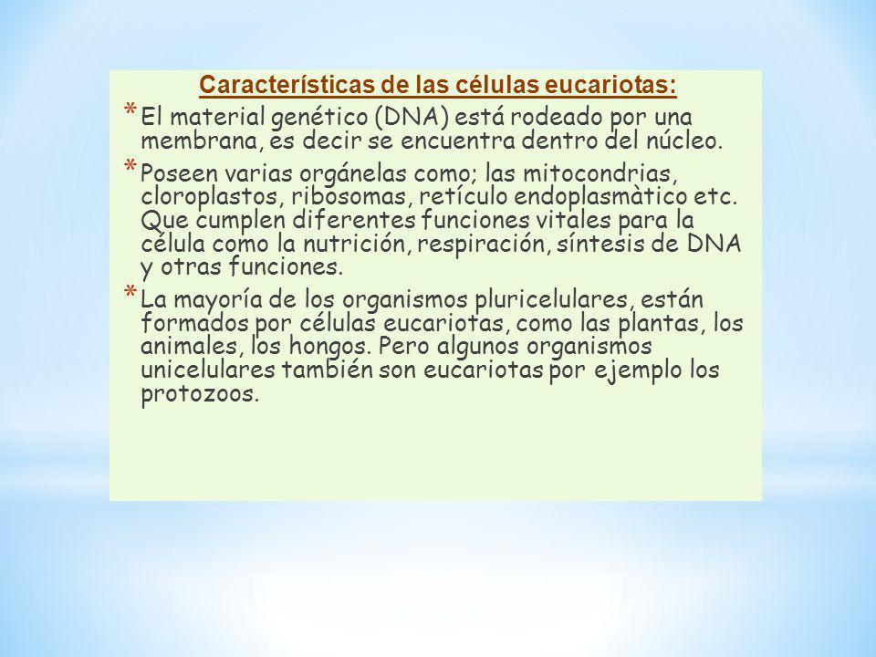 Características de las células eucariotas: * El material genético (DNA) está rodeado por una membrana, es decir se encuentra dentro del núcleo. * Pose