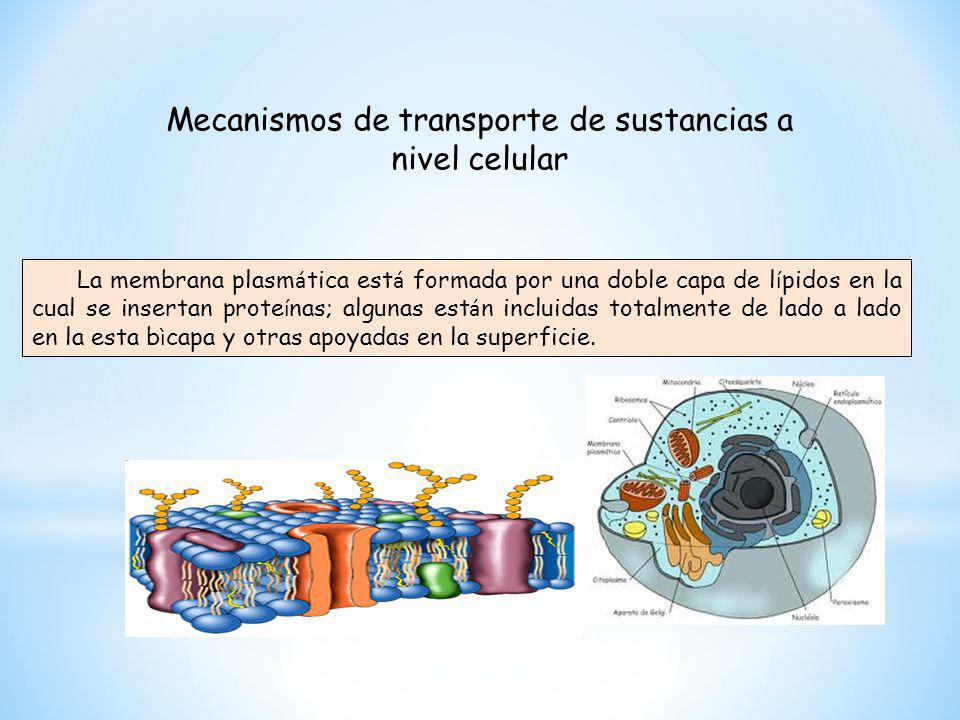 Mecanismos de transporte de sustancias a nivel celular La membrana plasm á tica est á formada por una doble capa de l í pidos en la cual se insertan p