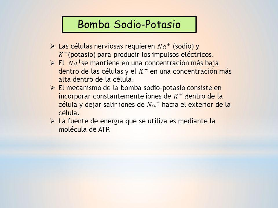 Bomba Sodio-Potasio