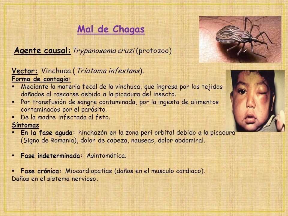 Mal de Chagas Agente causal: Trypanosoma cruzi (protozoo) Vector: Vinchuca (Triatoma infestans). Forma de contagio: Mediante la materia fecal de la vi